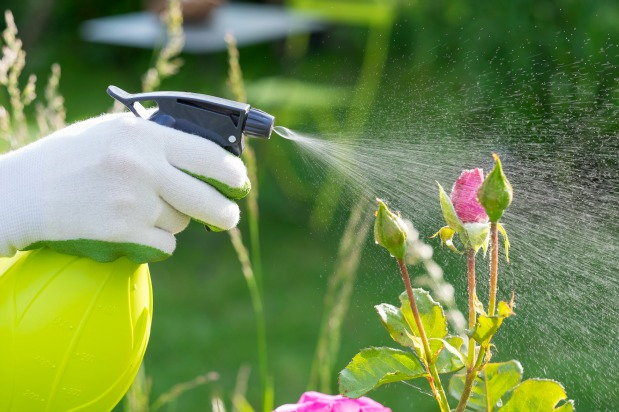 close up shot of someone's hands squeezing a water sprayer for watering plants
