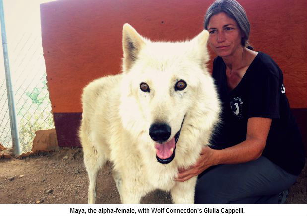 Maya with Wolf Connection's Giulia Cappelli
