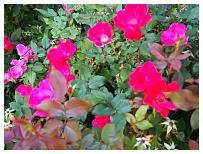 http://www.steves-digicams.com/camera-reviews/olympus/om-d-e-m10-mark-ii/P9180487.JPG