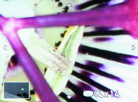 Pentax K-01_playback-zoom-X14.jpg