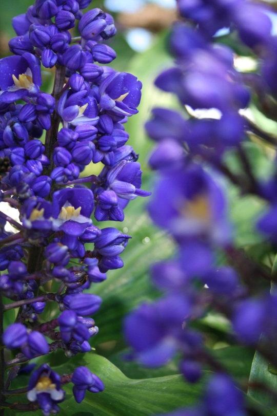 macro-photog-focus.jpg