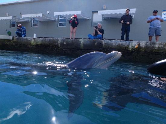 DolphinHello.jpg