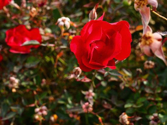 Olympus_PEN-F_saturatedflower.jpg