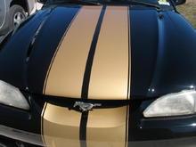 Mustang hood stripes