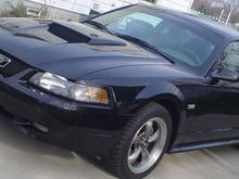 First day I got my stang