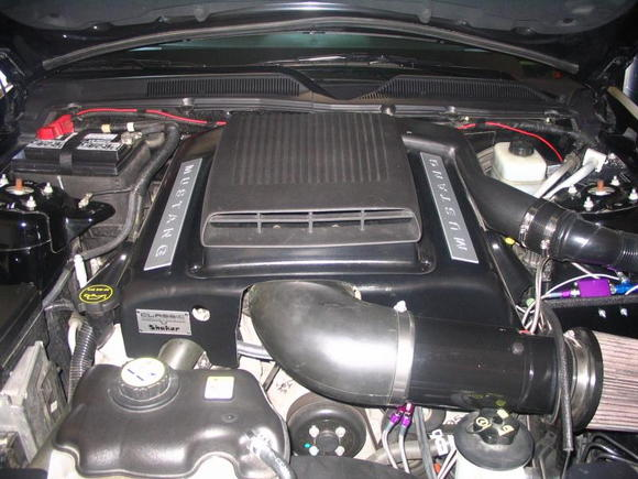 mustang pictures 004