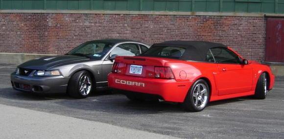 Our Cobra's