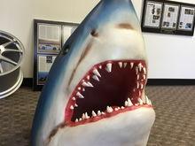 SharkWerks