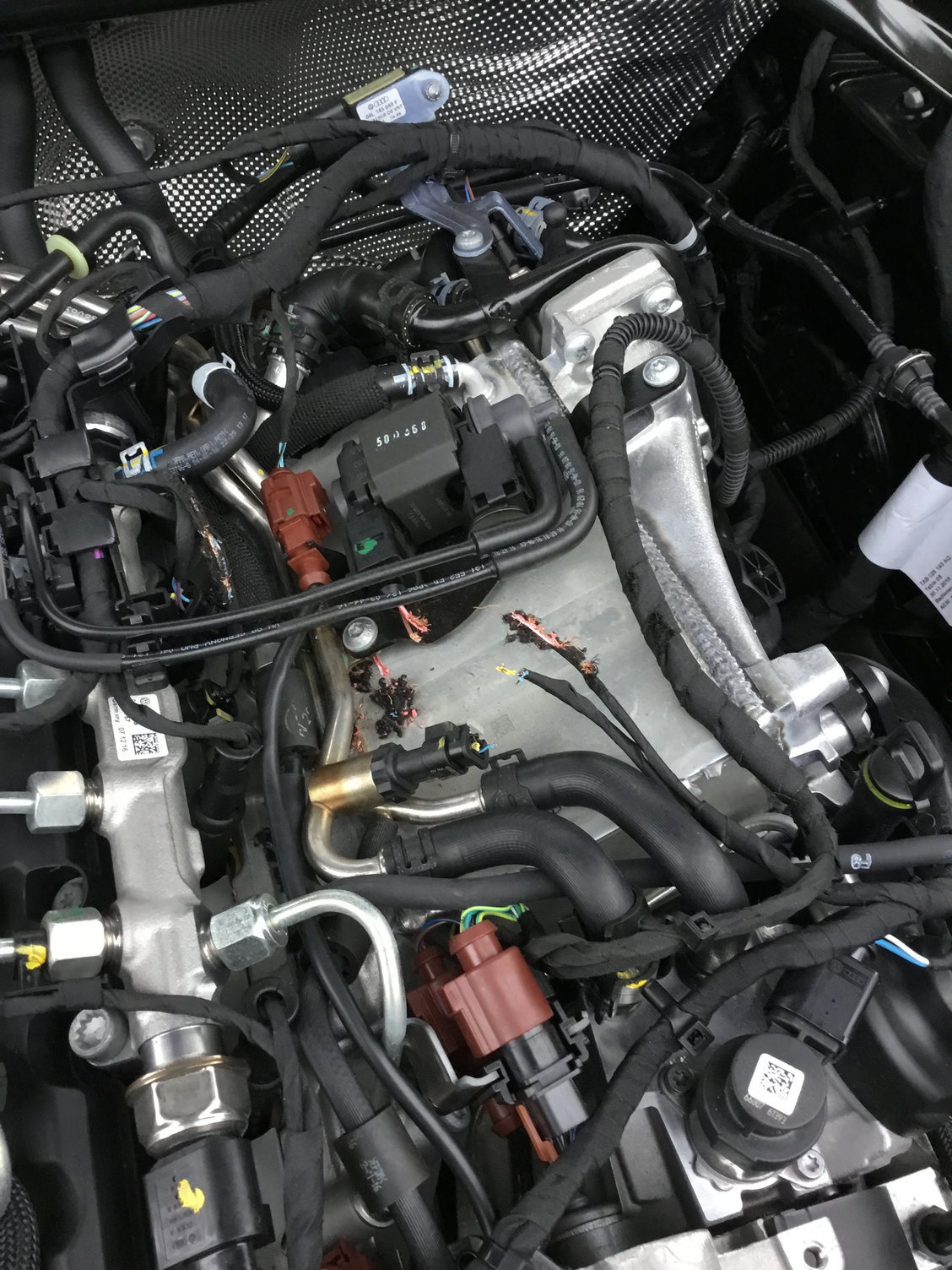 Rodents ate wires in my 2018 Q5!!! - AudiWorld Forums