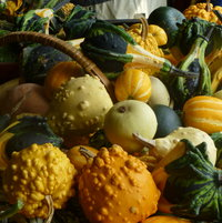 I REALLY LIKED THE KNOBBY GOURDS.   ALL OF THEM DID GREAT IN MY VERTICLE GARDEN.
