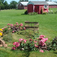 mini rose garden