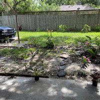 Texas Clay Garden (year I)