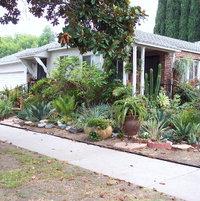 side yard 2008
