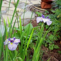 Iris Gay Gallant