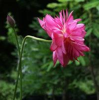 Lotus Shengli