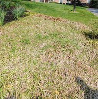 Creeping Liriope, also called Lilyturf looks horrible most years in late winter and early spring. it slowly takes over all ground and any shorter plants around will be in trouble.