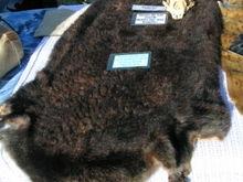 Otter Pelt