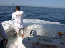 Billfish tournament boats who fish the circuit often back down on billfish faster than you can imagine.