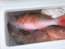 Nice red and decent mutton - first day on the Sea Vee.