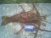 Peck Lake lobster
